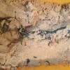 キュウリの古漬けのシフト3種