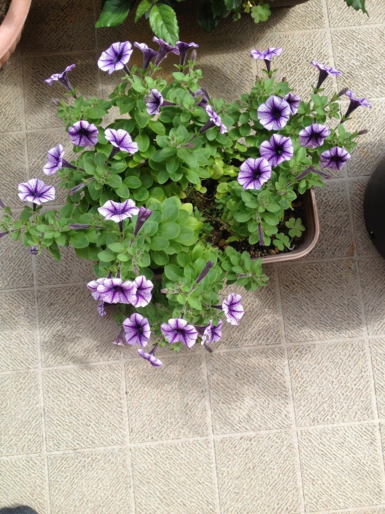 沖縄における春のお花